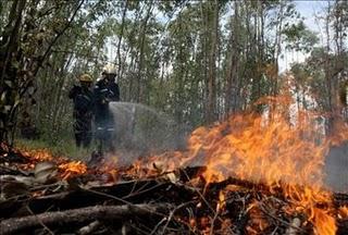 bosque incendiado