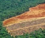 amazonía deforestada