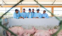 danilo entrega cerdos en cumayasa