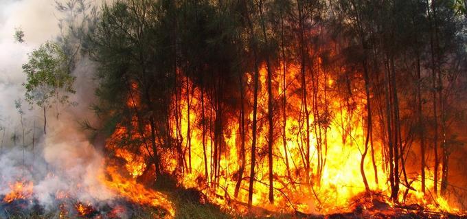 fuego forestal en sierra bahoruco