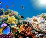 Arrecifes-de-Coral-1021x580